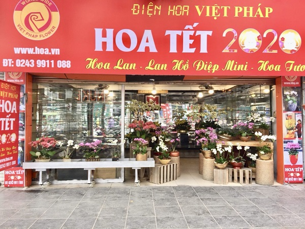 Lưu ngay địa chỉ mua lan hồ điệp sang - sành - nghệ thuật dịp Tết 2020