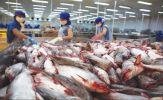 Vì sao hàng loạt doanh nghiệp xuất khẩu cá tra rút khỏi EU?
