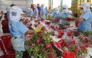 Nông sản cung ứng của 19 tỉnh đang dư thừa, dự báo cung sẽ vượt cầu