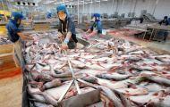 Xuất khẩu thủy sản giảm 30% trong tháng 8, cảnh báo đứt gãy chuỗi sản xuất