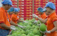 Xuất khẩu nông sản tháng 8 giảm mạnh