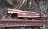 Quảng Bình: Khởi tố vụ phá rừng tại VQG Phong Nha – Kẻ Bàng