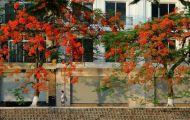 Xao xuyến những sắc hoa cuối mùa hè