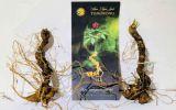 Sâm Ngọc Linh - Loại sâm quý nhất thế giới