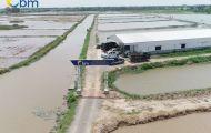 Bao Minh Aquatic Products - Đơn vị  đầu tiên tại Việt Nam xuất nhập khẩu con giống thủy sản chính ngạch
