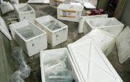 146 cá thể cá rồng nhập khẩu trái phép theo đường hàng không