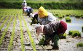 Hàn Quốc bây giờ chỉ có người già làm nông