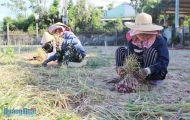 Cây trồng, vật nuôi rớt giá: Nông dân gặp khó khăn