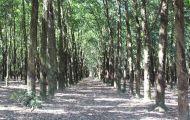 Tây Ninh: Giao đất cho dân rồi... 'lật kèo'