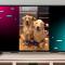 TikTok ra mắt ứng dụng cho TV thông minh LG 2020 và 2021